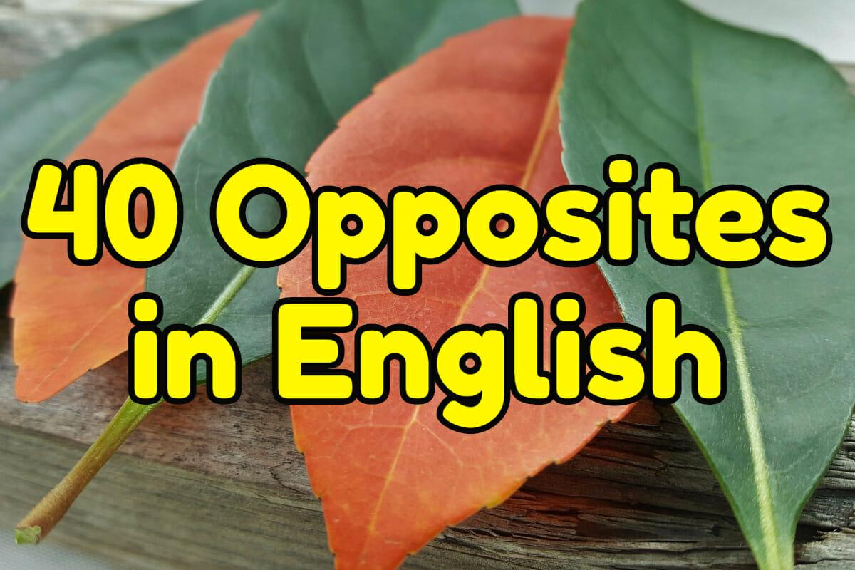 40 common opposites in English – Espresso English